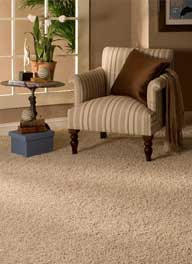 raleigh elite carpet cleaning